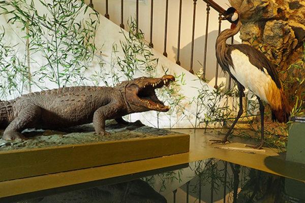 Le Museum d'Histoire Naturelle de Bourges